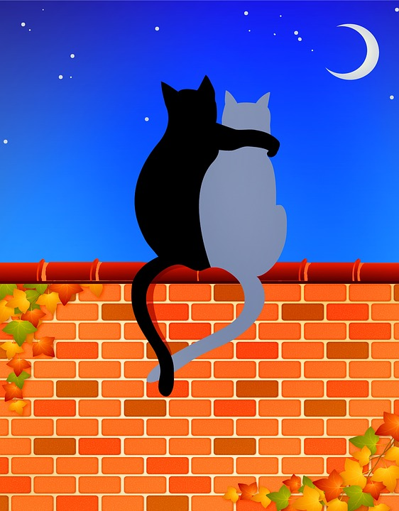 cats-on-brick-wall-3743662_960_720.jpg